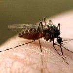 комар,обработка,уничтожение,выведение
