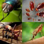 насекомые,уничтожение,борьба,обработка,выведение