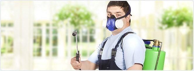 dezinfekciya-ot-klopov2
