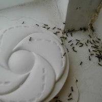 Ловушка от муравьев дома