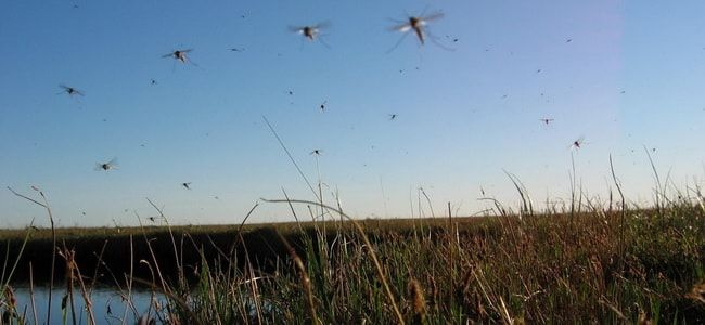zashchita-ot-komarov