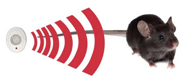 ultrazvukovye-otpugivateli-krys-min
