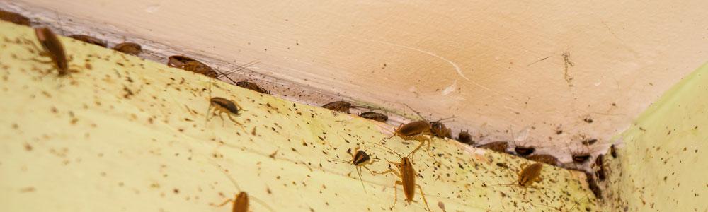 Заказать дезинсекцию от тараканов