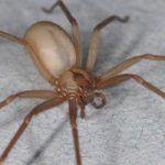 Дезинсекция пауков