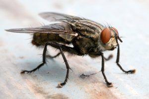 Как избавится от мух