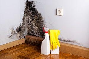 Что такое грибок в доме
