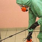 Проведение дератизации помещений