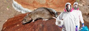Дератизация мышей