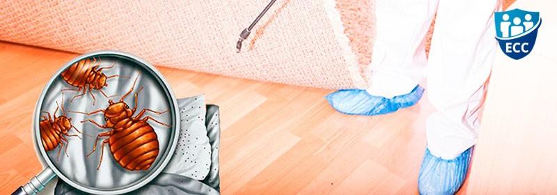 Уничтожение клопов в квартире