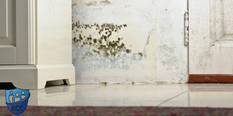 Как избавиться от грибка на стенах