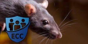 Как избавиться от крыс и мышей