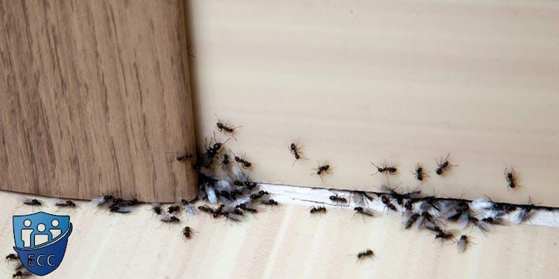Избавиться от муравьев в доме