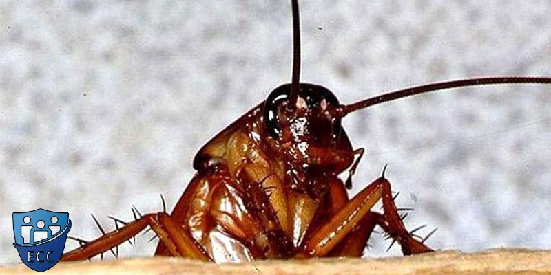 Как вытравить тараканов из квартиры навсегда