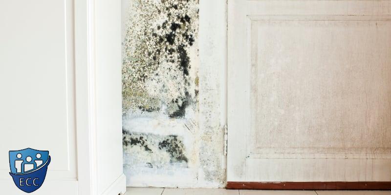 Обработка стен от плесени