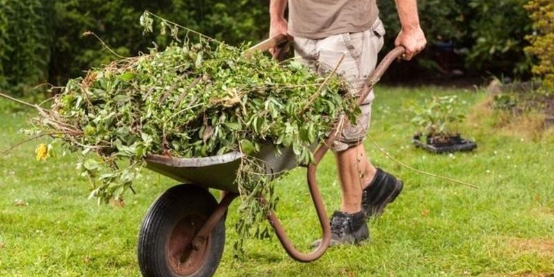 Что делать с сорняками на даче