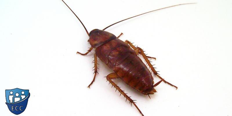 Эффективная борьба с тараканами