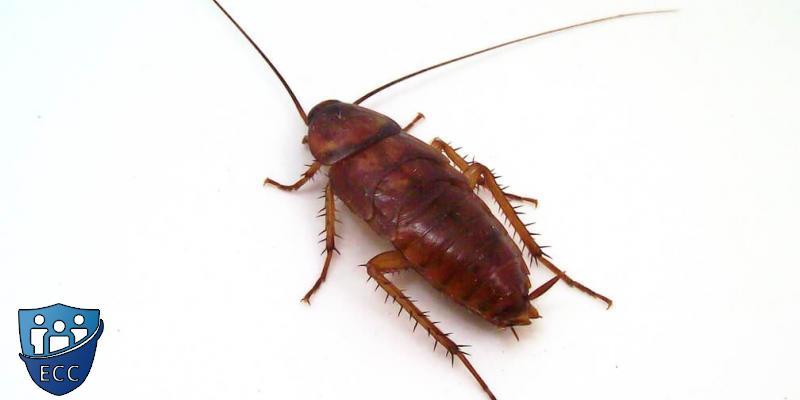 Морить тараканов в квартире
