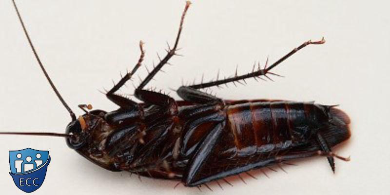 Травить тараканов дома