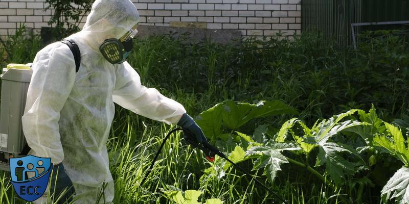 Борьба с сорняками гербицидная обработка